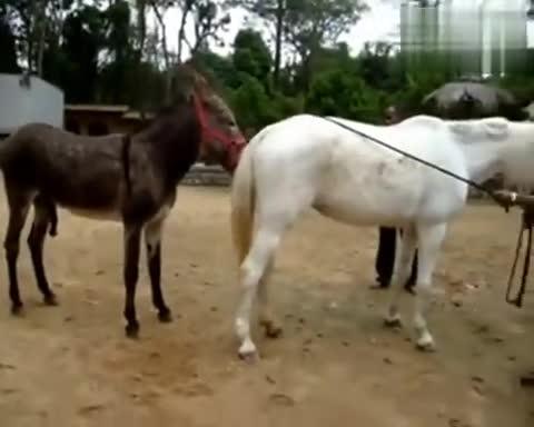 动物性行为动物 交配-外国视频