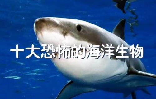 可怕海底动物名称