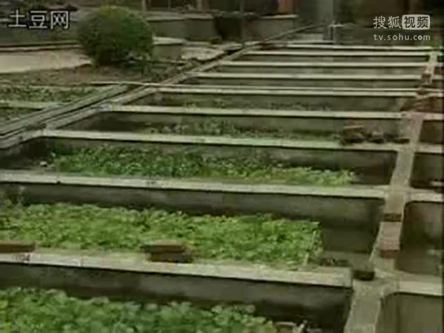 黄鳝养殖视频_大棚黄鳝养殖技术视频-原创视频-搜狐视频