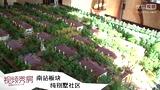 第184期 香堤庭院:南站板块纯别墅社区