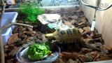 嘉兴地区爬友QQ群 蜥蜴 陆龟 鳄龟 绿鬣蜥