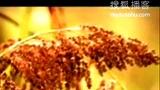 茅台集团浓香白酒酿造基地-贵州习酒城-质量第一,以质取胜;无情不商,诚信为本;爱我茅台,为国争光!