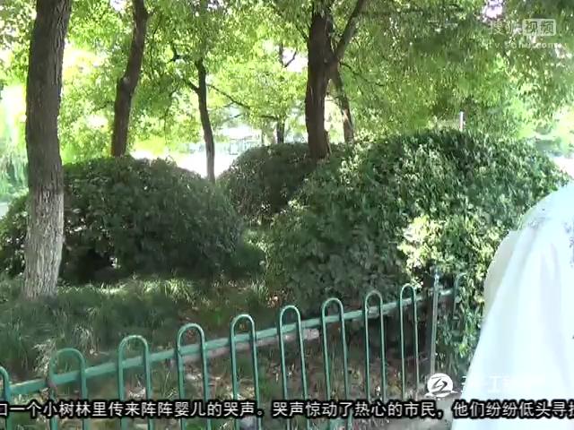 阳谷小树林视频-360视频搜索