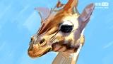 51.创意长颈鹿