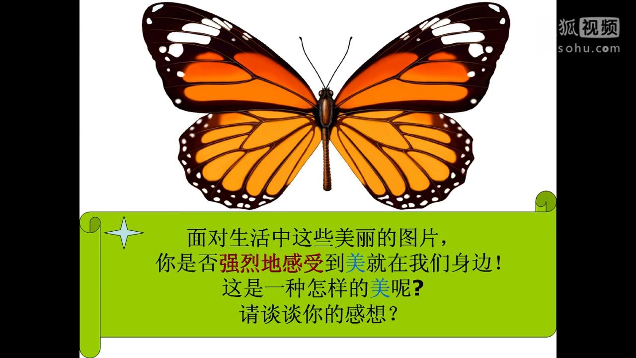 昆虫轴对称图形简笔画