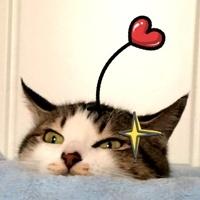 猫神辣椒酱