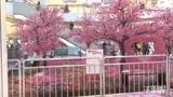 【郑州】城会玩!情人节桃林搬进大商场美呆了